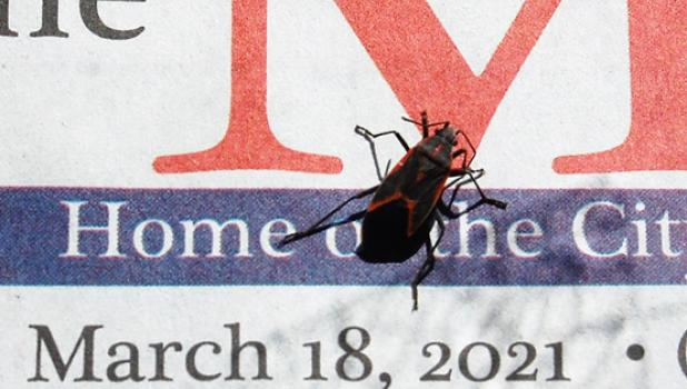 At the Mascot office this past week, a boxelder bug was seen crawling on the inside of the front window. He eventually made his way on top of the front page of last week's Mascot, indicating the date the first bug of its kind that we spotted this year.