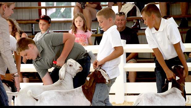 Cael Fier at the county fair.