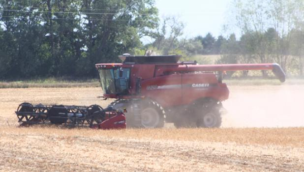 David Buysse harvests his navy beans northeast of Minneota under sunny skies on Friday afternoon.