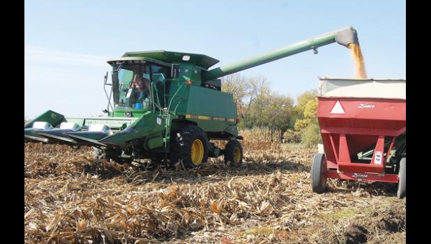 Garrett Moorse harvests a corn field just east of Minneota.