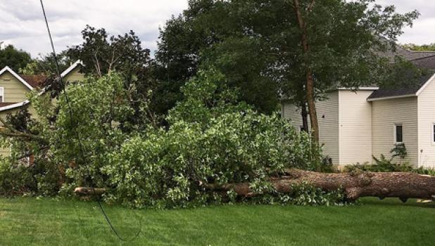 A Maple tree fell on the Midco line at the home of Josh Sumption in Porter.