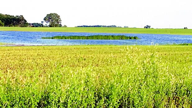 Water has kept some fields inundated with moisture.