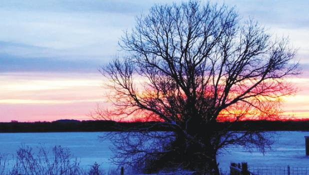 The sun sets behind a lonely bare tree in the country