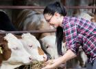 Livestock producers may apply for a portion of $1.9 million in Livestock Investment Grants.