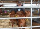 """""""I'll probably never see this again in my lifetime,"""" said local farmer Luke Moorse who had his hands full wrangling his rare set of healthy Red Angus triplet heifers. Staff photo by Scott Thoma."""