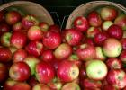 The Minnesota Grown Directory is available in print and online, and are great resources for finding local apple orchards or farmers markets.