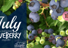 July is National Blueberry Month and Minnesota's blueberry season is rapidly approaching!